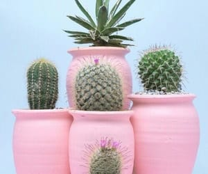 cactuses, green, and plants image