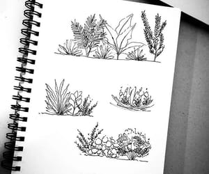 dibujo, plants, and drawing image