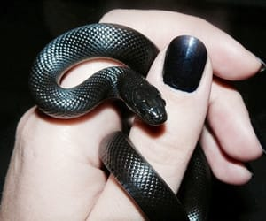 animals, nails, and black image