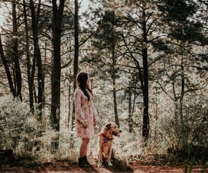 brunette, dog, and dogs image
