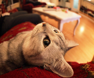 cat, fisheye, and quality image