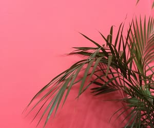 background, green, and palm image