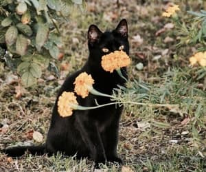 cat, flowers, and black image