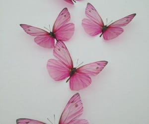 background, butterfly, and pink image