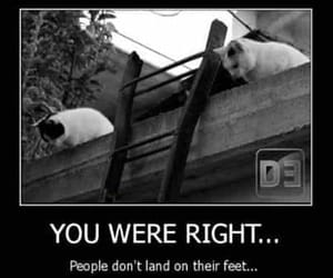 animals, funny, and pets image