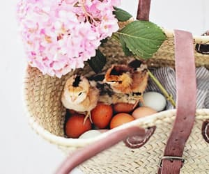 adorable, april, and baby birds image