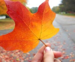 autumn, beautiful, and feed image