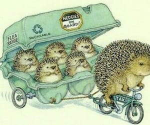 cute, hedgehog, and illustration image