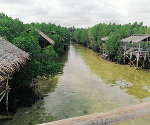 mangrove, photography, and sea image