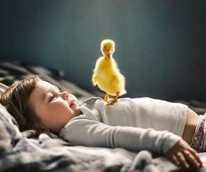 duck, baby, and love image