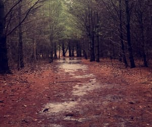 fall, forest, and photography image