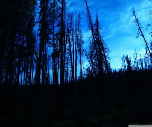blue, night time, and night in the woods image