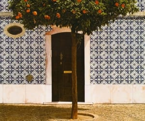 tree, orange, and portugal image