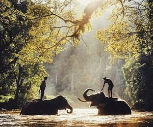 animals, river, and elephants image