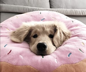 donut, pink, and puppy image