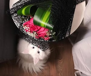 arab, cat, and flowers image