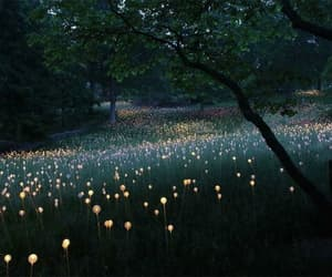 light, nature, and flowers image