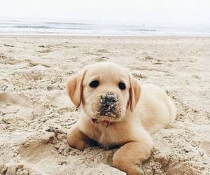 dog, animal, and sand image