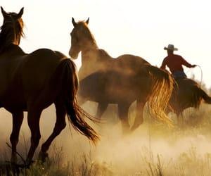 horse, cowboy, and animal image
