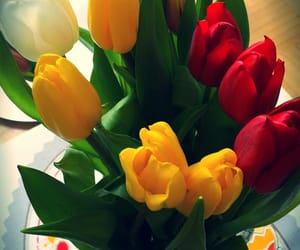 colour, easter, and flowers image