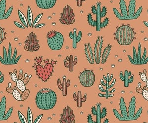 cactus, background, and succulent image