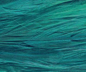blue, plume, and turquoise image