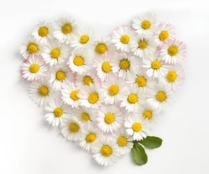 flower, spring, and heart image