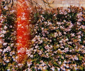 flowers, in bloom, and spring image