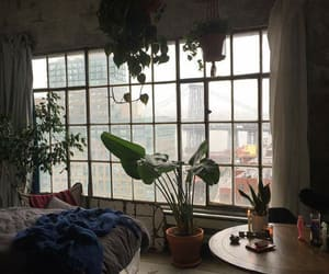plants, room, and home image