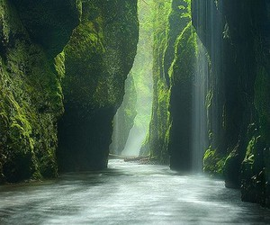 nature, green, and water image