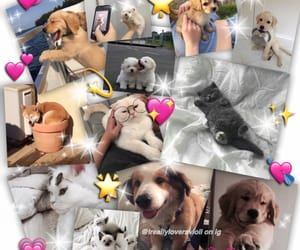 aesthetic, animals, and Collage image