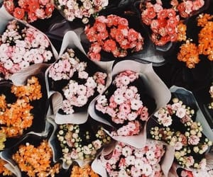 colors, flowers, and spring image