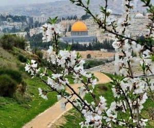 palestine, فلسطين, and ّالقدس image