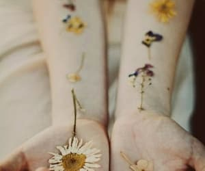 awesome, daisies, and daisy image