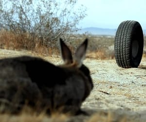 bunny, rabbit, and rubber image