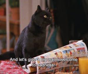 cat, sadness, and salem image