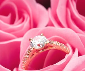 pink, rose, and ring image