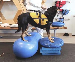 pet health care, veterinary clinic, and vet rehabilitation image