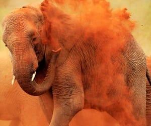 elephant, orange, and animal image