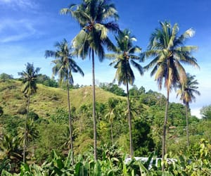 blue, coconut, and trees image