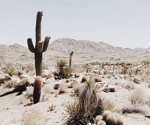 cactus, desert, and Hot image
