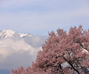 cherry blossom, clouds, and pink image