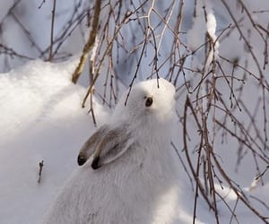 winter, snow, and rabbit image