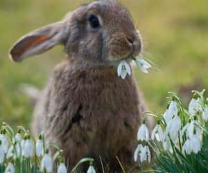 animal, bunny, and rabbit image