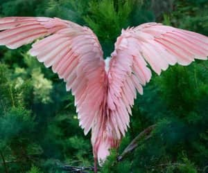 pink, bird, and nature image