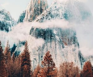 amazing, forest, and nature image