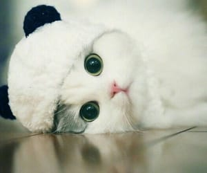 cat, puppy, and cute image