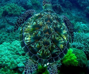 Animales, naturaleza, and Tortuga image
