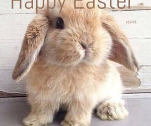 bunny, Chick, and easter image