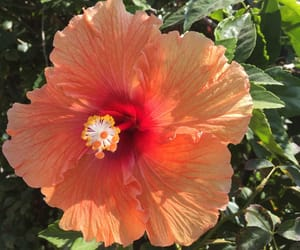 coral, sunlight, and flower image